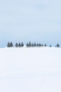 雪原に一列に並んだ防雪林の写真素材 [FYI04101788]
