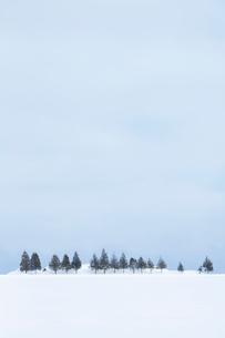 雪原に一列に並んだ防雪林の写真素材 [FYI04101789]