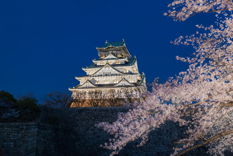 ライトアップされた大阪城と満開の桜の写真素材 [FYI04102134]