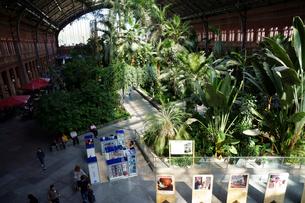 スペイン マドリッドのアトーチャ駅の構内の写真素材 [FYI04102144]