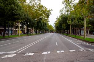 スペイン バルセロナの街の並木通りの写真素材 [FYI04102208]
