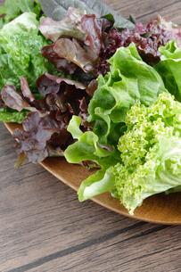 葉物野菜の写真素材 [FYI04102263]