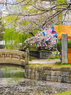 土浦城の春の写真素材 [FYI04102475]