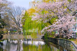 石橋から土浦城の桜の写真素材 [FYI04102476]