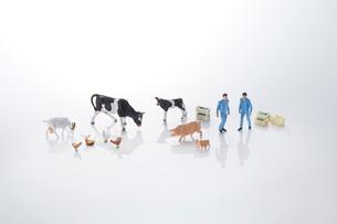 酪農、畜産イメージの写真素材 [FYI04102661]