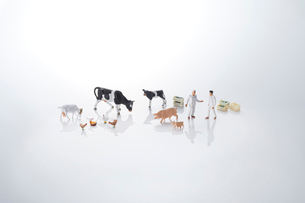 酪農、畜産イメージの写真素材 [FYI04102662]