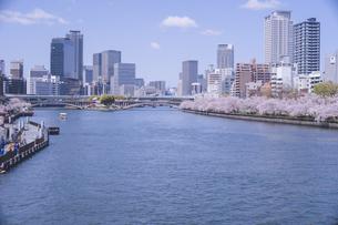 快晴の大阪桜宮橋から造幣局周辺の桜を望むの写真素材 [FYI04102739]