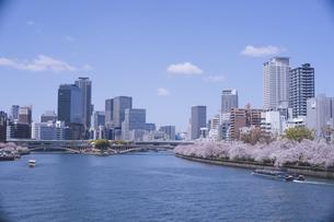 快晴の大阪桜宮橋から造幣局周辺の桜を望むの写真素材 [FYI04102742]