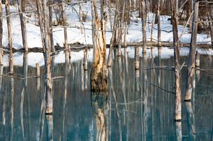 雪が溶け始めた湖の写真素材 [FYI04103069]