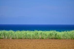 サトウキビ 海の写真素材 [FYI04103286]