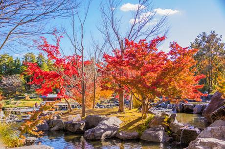 紅葉と青空 けいはんな記念公園の写真素材 [FYI04103394]