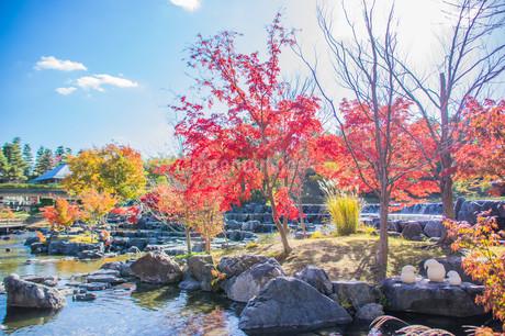紅葉と青空 けいはんな記念公園の写真素材 [FYI04103395]