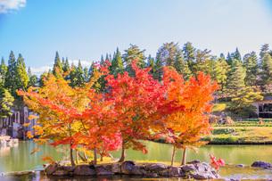 紅葉と青空 けいはんな記念公園の写真素材 [FYI04103396]