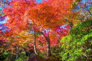 紅葉 けいはんな記念公園の写真素材 [FYI04103401]