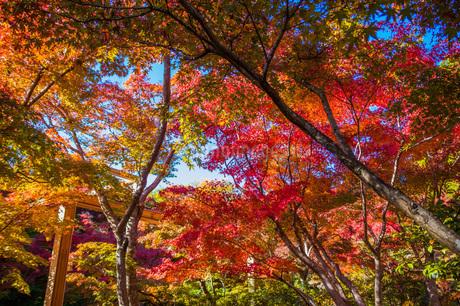 紅葉 けいはんな記念公園の写真素材 [FYI04103402]