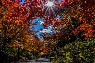 紅葉と星形の太陽の写真素材 [FYI04103403]