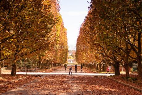 落ち葉の散歩道の写真素材 [FYI04103434]
