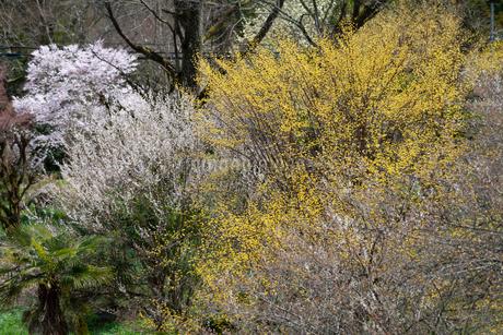 西吉野の花風景の写真素材 [FYI04103528]