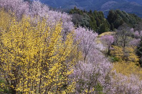 西吉野の花風景の写真素材 [FYI04103531]