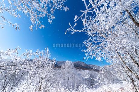 北海道冬の風景 富良野の樹氷の写真素材 [FYI04103593]