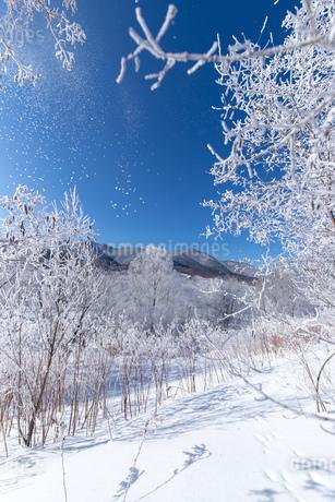 北海道冬の風景 富良野市の樹氷の写真素材 [FYI04103594]