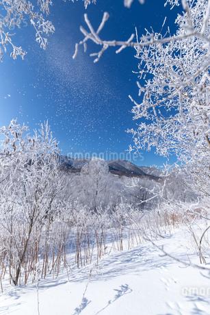 北海道冬の風景 富良野市の樹氷の写真素材 [FYI04103595]