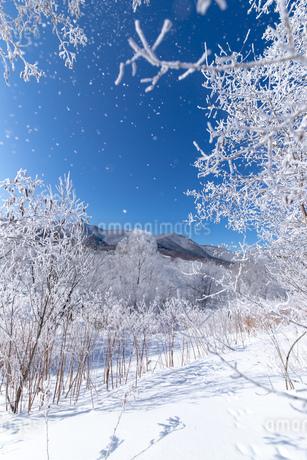 北海道冬の風景 富良野の樹氷の写真素材 [FYI04103596]