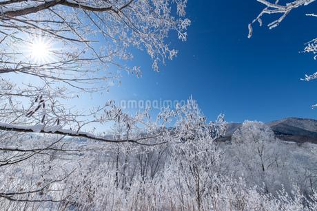 北海道冬の風景の写真素材 [FYI04103598]