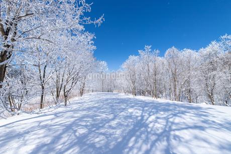 北海道冬の風景 富良野の樹氷の写真素材 [FYI04103599]