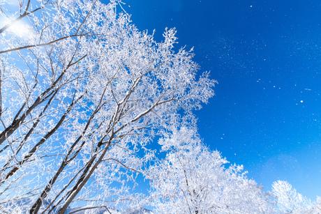 北海道冬の風景 富良野の樹氷の写真素材 [FYI04103601]