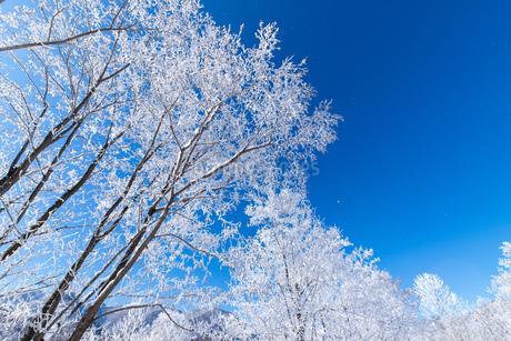 北海道冬の風景 富良野の樹氷の写真素材 [FYI04103604]