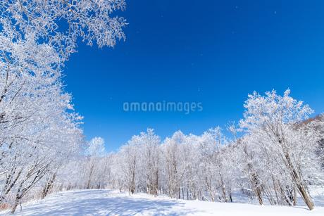北海道の冬の風景 富良野の樹氷の写真素材 [FYI04103605]