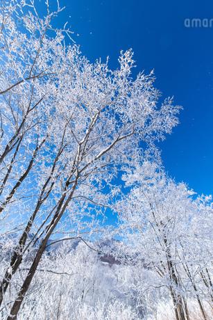 北海道冬の風景 富良野の樹氷の写真素材 [FYI04103606]