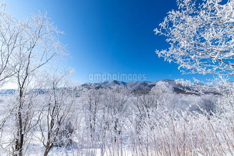 北海道冬の風景 富良野の樹氷の写真素材 [FYI04103612]