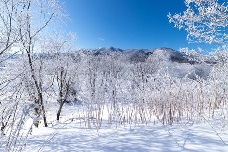 北海道冬の風景 富良野の樹氷の写真素材 [FYI04103613]