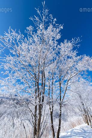 北海道冬の風景 富良野の樹氷の写真素材 [FYI04103615]
