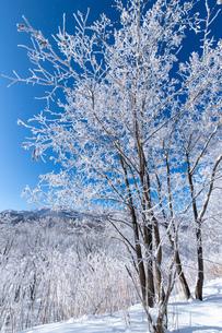 北海道冬の風景 富良野の樹氷の写真素材 [FYI04103616]