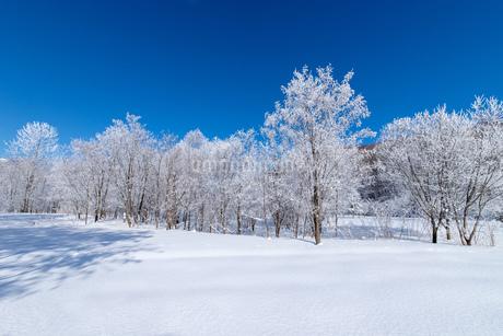 北海道冬の風景 富良野の樹氷の写真素材 [FYI04103619]