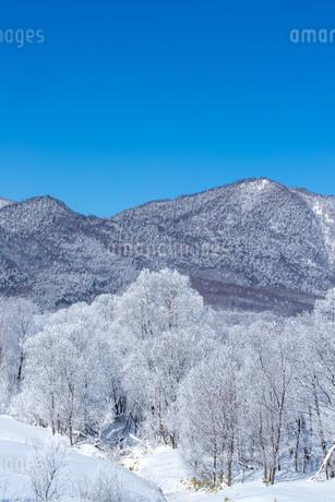 北海道の冬の風景 富良野の樹氷の写真素材 [FYI04103620]