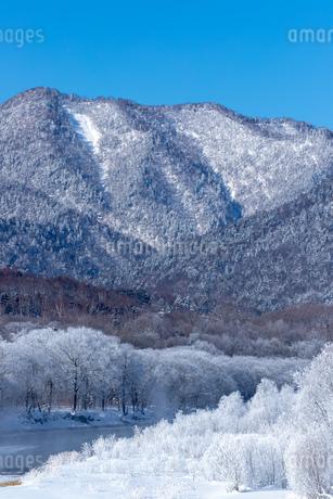 北海道の冬の風景 富良野の樹氷の写真素材 [FYI04103621]