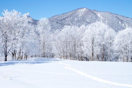 北海道冬の風景 富良野の樹氷の写真素材 [FYI04103622]