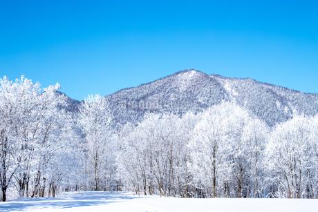 北海道冬の風景 富良野の樹氷の写真素材 [FYI04103623]
