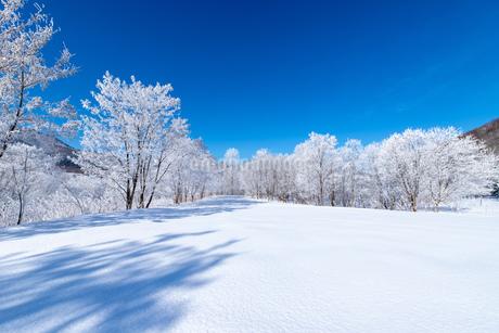 北海道冬の風景 富良野の樹氷の写真素材 [FYI04103624]