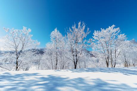 北海道冬の風景 富良野の樹氷の写真素材 [FYI04103625]