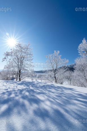 北海道冬の風景 富良野の樹氷の写真素材 [FYI04103627]