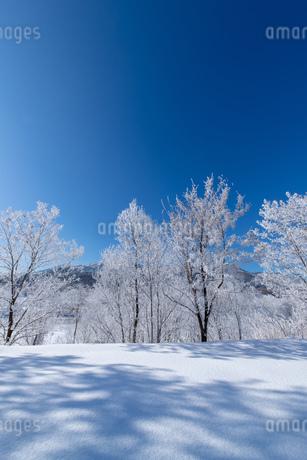 北海道冬の風景 富良野の樹氷の写真素材 [FYI04103628]