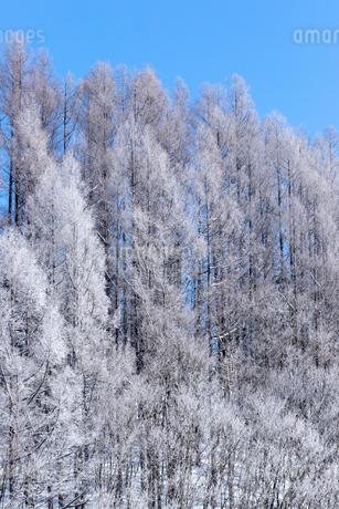 北海道冬の風景 富良野の樹氷の写真素材 [FYI04103632]