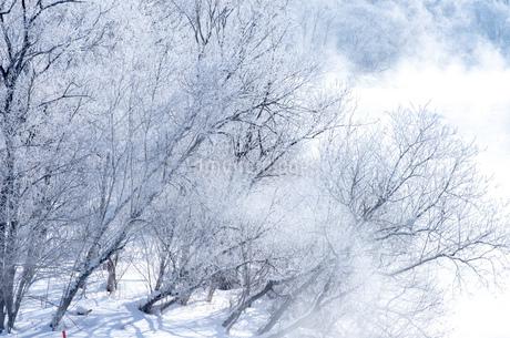 北海道冬の風景 富良野の樹氷の写真素材 [FYI04103633]