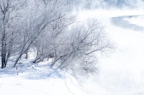 北海道冬の風景 富良野の樹氷の写真素材 [FYI04103635]