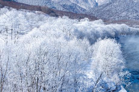 北海道冬の風景 富良野の樹氷の写真素材 [FYI04103644]